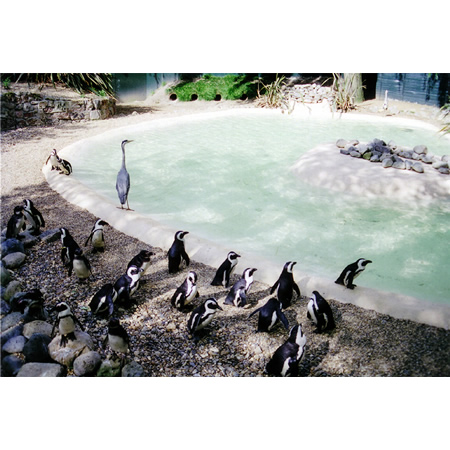 London Zoo #1, 2005