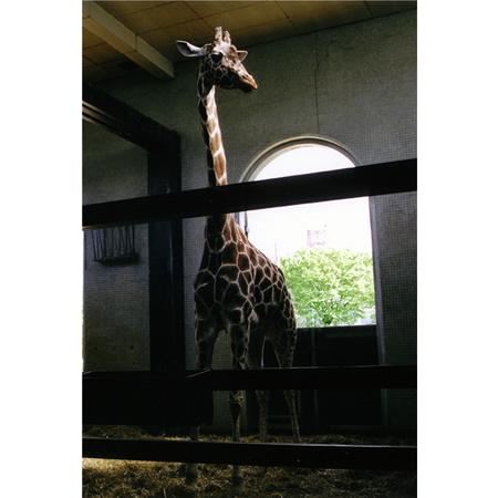 London Zoo #3, 2005